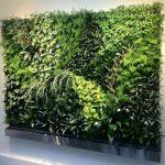 Mur vegetal Hérault